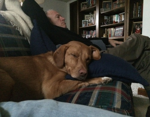Thanksgiving wore him out.